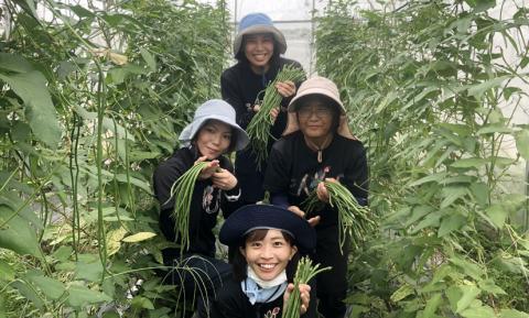 農業生産法人 イータス 株式会社【野菜の収穫スタッフ】の求人募集画像