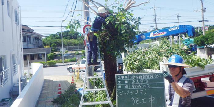 有限会社 桂植木【造園技術者】の求人募集画像